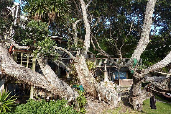 Uno de los árboles que reclaman el terreno que les fue arrebatado por el albergue