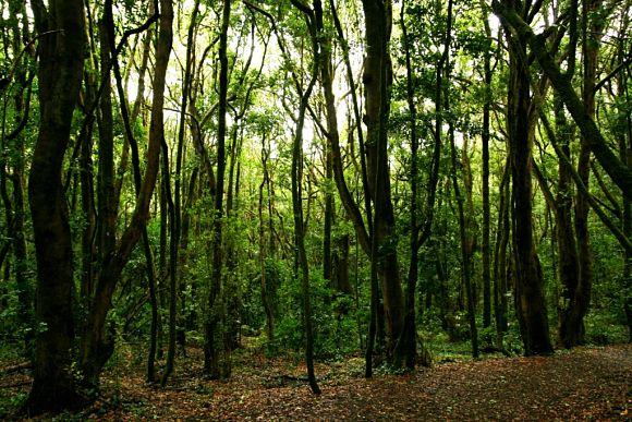 Los amplios bosques con los que cuenta el Parque Nacional de Garajonay le dan al lugar un ambiente muy misterioso