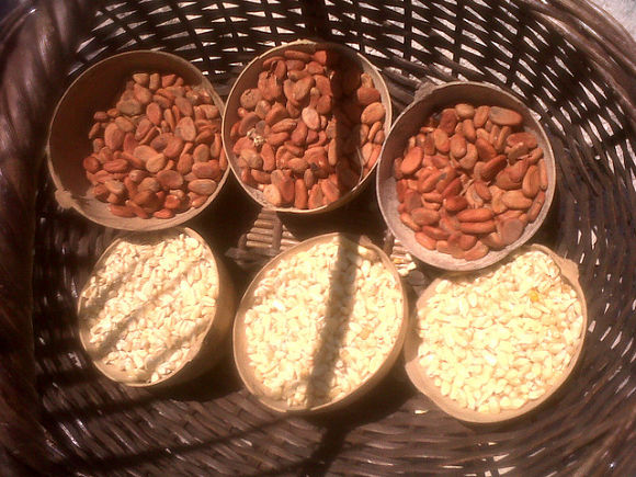 Los aztecas utilizaban el maíz y el cacao para preparar el champurrado