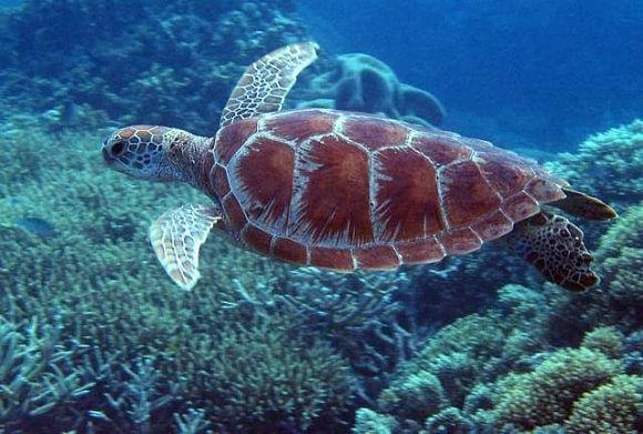 La Gran Barrera de Coral es un lugar fascinante para los amantes de la fauna marina por la gran cantidad de especies que habitan en ella