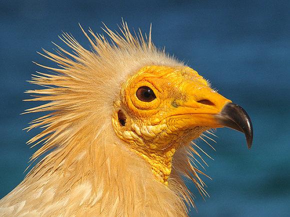 En el archipiélago de Socotra habitan aves de todos los tamaños y colores