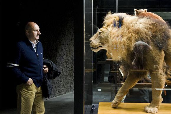 Imagen de un león disecado en el Museo de Ciencias Naturales de Barcelona