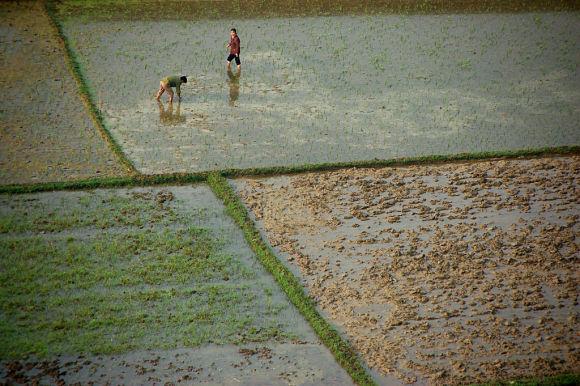 Uno de los mayores atractivos de la localidad, son sus campos de arroz, el principal cultivo de China