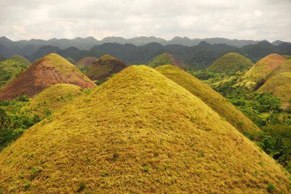 El nombre de las Colinas de Chocolante de Filipinas viene por su color pardo cuando se secan