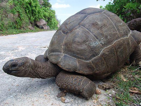En la isla de La Digue podremos visitar la colonia de las tortugas gigantes