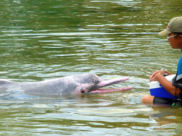 delfin rosa
