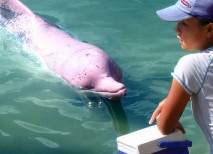 delfin rosado Amazonas