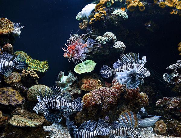 Palma Aquarium peces y corales