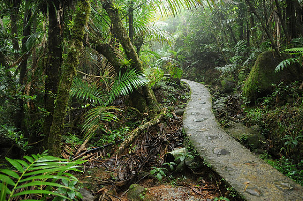 Bosque El Yunque