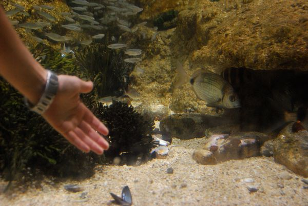 Aquarium San Sebastian Tactil