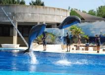 Zoo de Madrid Delfines