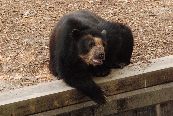 zoo madrid osos