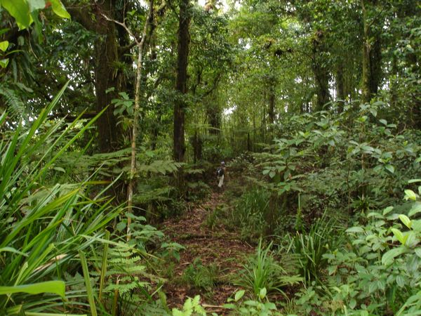 Isla del Coco Bosque Nuboso