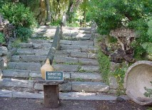 jardin botanico lluc