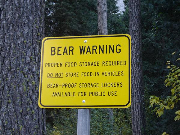 parque yosemite osos