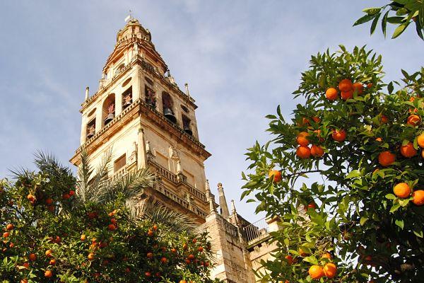mezquita catedral cordoba patio naranjos