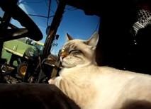gato viajero