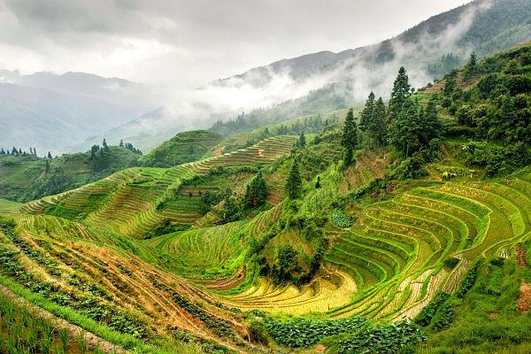 arrozal guilin