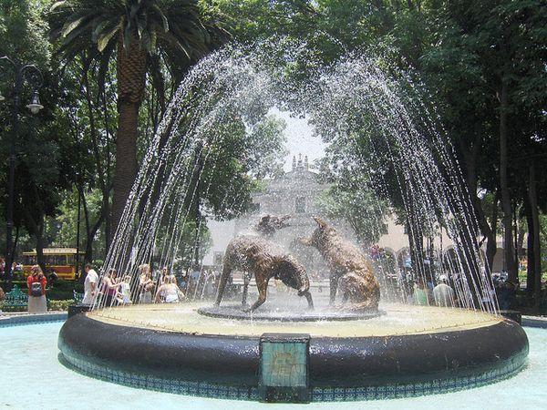 plaza hidalgo coyoacan coyotes