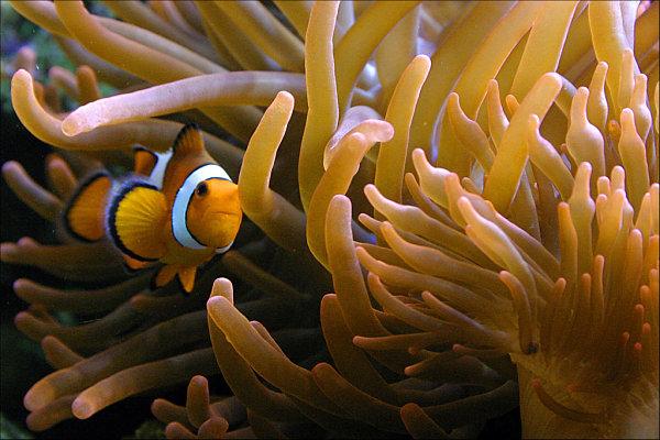 AquaDom Berlin peces