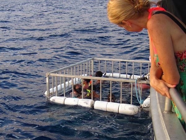 shark cage hawai
