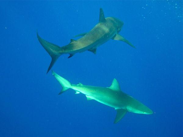 shark cage jaula