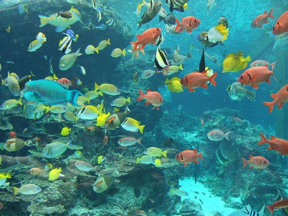 Un arco iris compuesto de peces nos espera en el acuario Churaumi