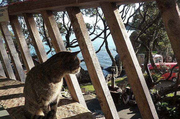 Felino mirando desde uno de los balcones de Maraehako Bay Retreat