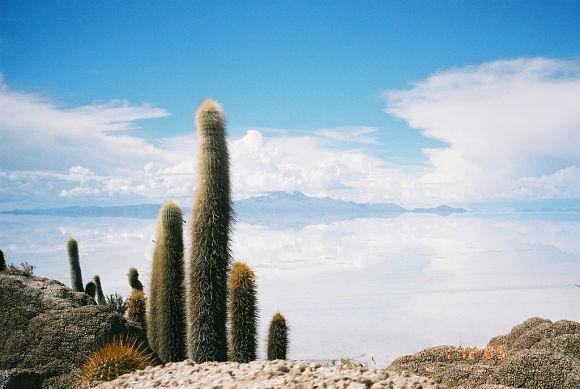 Vistas de la Isla del Pescado donde se ven sus cactus gigantes y la confusión entre mar y tierra