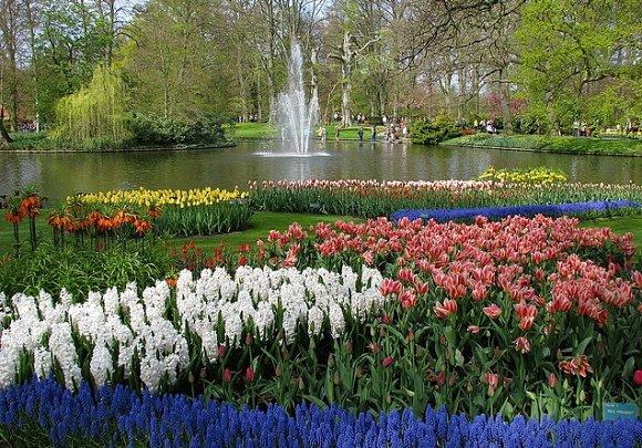 Fotografía de una de las muchas praderas floreadas que conforman el Keukenhof, el Jardín de Europa