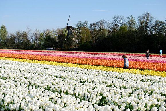 Los campos de flores del Keukenhof están perfectamente cuidados y tienen formas asombrosas
