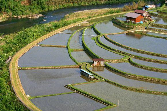 Terrazas de Yunnan usadas para el cultivo de arroz y otros cereales de agua