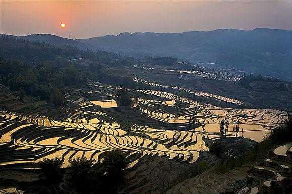 Terrazas De Yunnan En China Dibujando La Naturaleza
