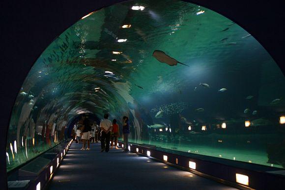En edificio de los Océanos, encontraremos un enorme túnel que nos guiará por la fauna característica de las aguas oceánicas de nuestro planeta
