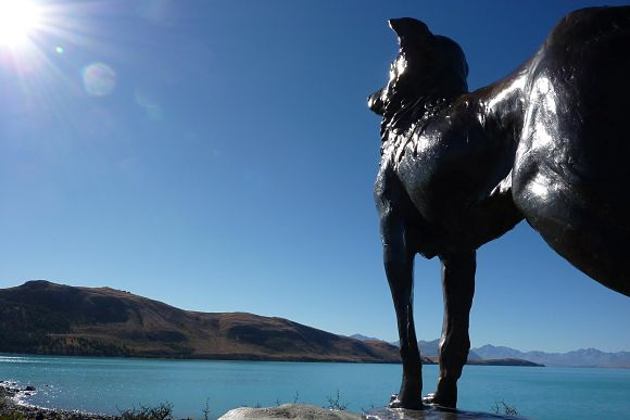 Estatua perro Collie escocés Lake Tekapo
