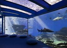 Palma Aquarium-tiburones