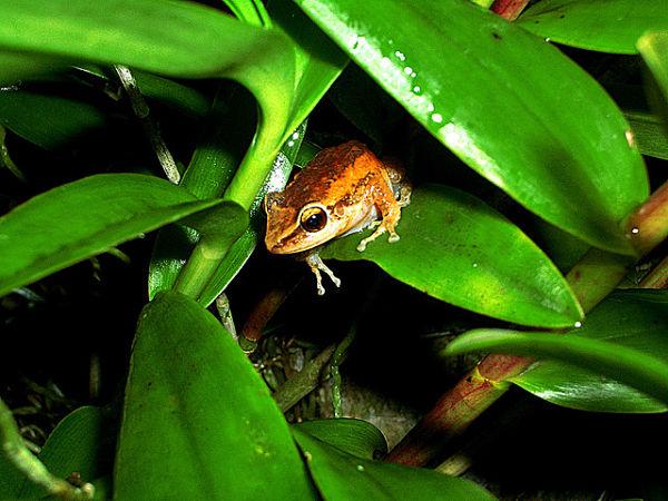 El Yunque fauna