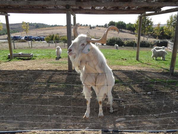 En Sendaviva cualquier animal se arrima a nosotros con tal de conversar