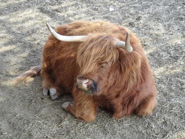 El abrigo de algunas vacas de Sendaviva sobra en verano