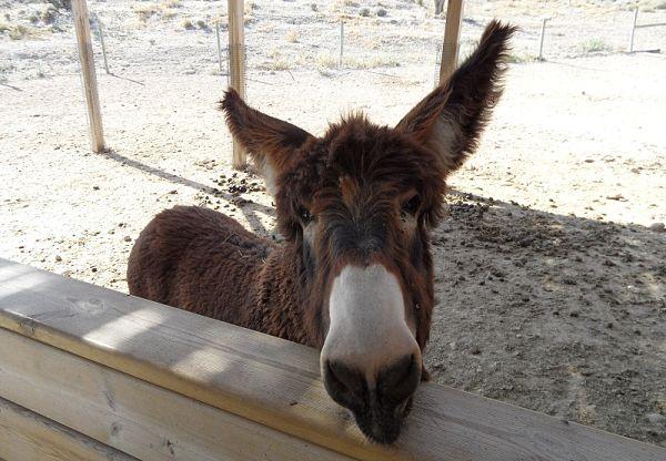 Aquí tenéis a Palmira, el burro que da da imagen al parque de Sendaviva