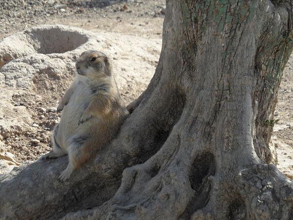 En Sendaviva, la pachorra de los animales se asemeja a la de los humanos