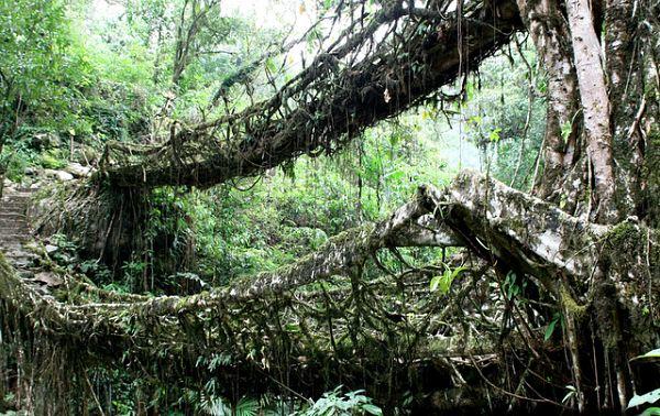 Imagen del puente doble de raíces, la mayor atracción de Cherrapunjee en la India