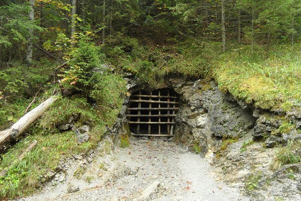 Los osos habitan en las inmediaciones de los montes Tatra de Polonia