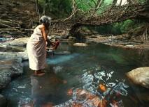 Mujer lavando mientras mira a un ancestral puente viviente de Cherrapunjee en la India
