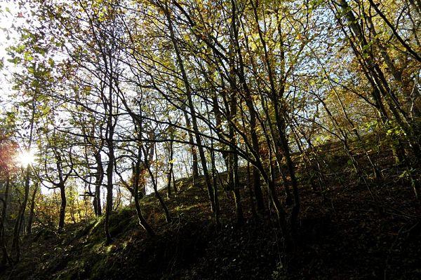bosque Parque Natural Señorío de Bértiz