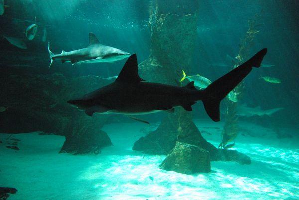 Zoo de Madrid Tiburones Acuario