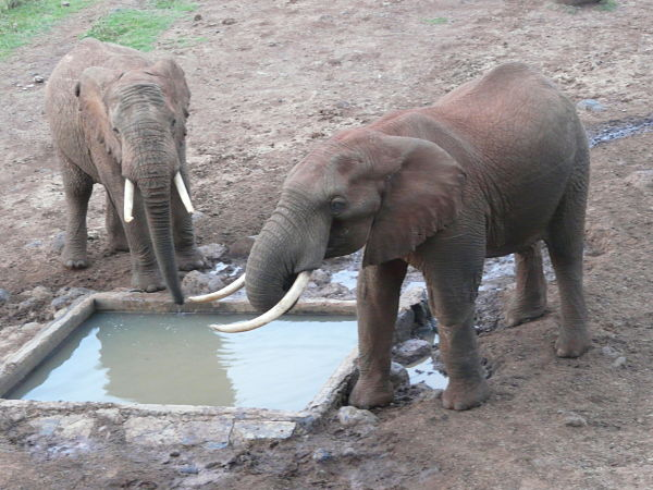 treetops lodge kenia elefantes