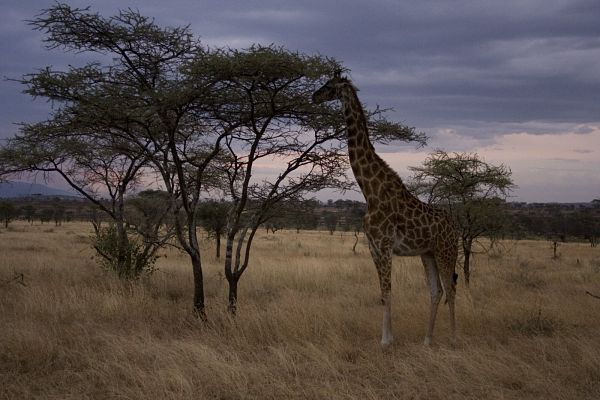 Puesta de sol en el Serengueti