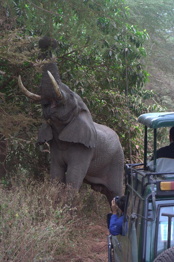 sabana africana elefantes