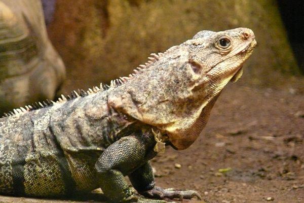 reptil zoo barcelona
